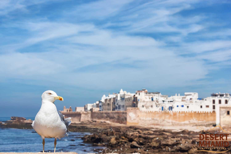 Essaouira excursion